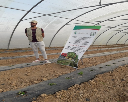 Follow-up on the cultivation of strawberry crops...